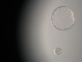 Freezing equine embryos