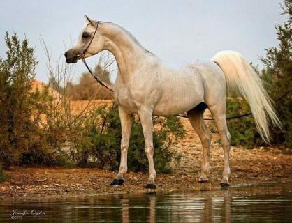 Amaar Al rayyan